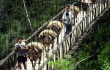Peru: Bộ Nông nghiệp cùng với nông dân cà phê xác định các biện pháp để chống lại bệnh gỉ sắt lá